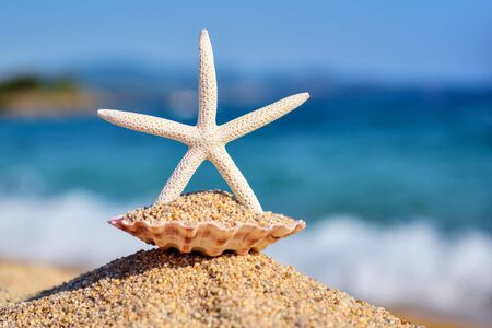 A white starfish on the beach against the background of the sea and the blue sky on a hot sunny day Reklamní fotografie