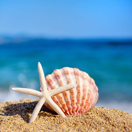 A white starfish and a shell on the beach against the background of the sea. Summer concept