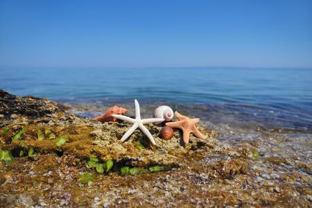 Shells and starfish on stones against the background of the sea on a hot sunny day