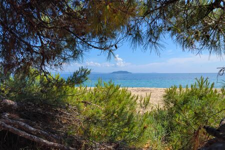 Sea view from beach. Pine forest tree by the sea in Halkidiki, Greece