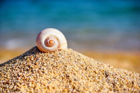 A sea shell on the beach against the background of the sea and the blue sky on a hot sunny day. Summer concept