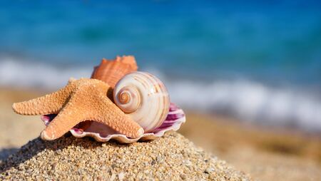 Shells and starfish on the beach against the background of the sea on a hot sunny day. Summer concept Reklamní fotografie