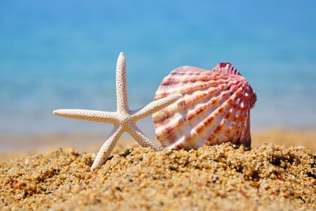 A white starfish and a shell on the sand against the background of the sea. Summer concept