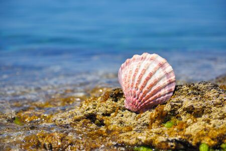 A shell on stones against the background of the sea on a hot sunny day