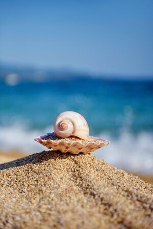 Shells on the beach against the background of the sea and the blue sky on a hot sunny day. Summer concept