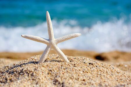 A white starfish on the beach against the background of the sea on a hot sunny day Reklamní fotografie