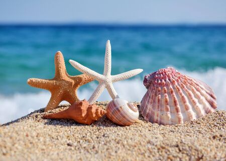 Shells and starfish on the beach against the background of the sea and the blue sky on a hot sunny day. Summer concept