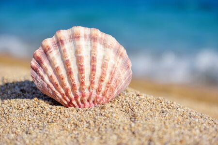 A sea shell on the beach against the background of the sea on a hot sunny day. Summer concept