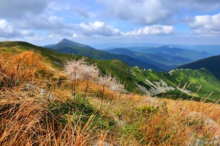 Bright summer morning in the Carpathian mountains. Photography with alpine grasses in the foreground