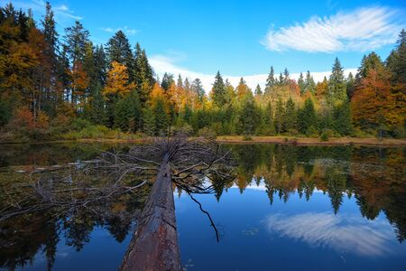 Amazing landscape with a lake in the autumn forest