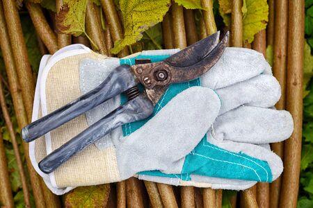 Garden gloves with old garden secateur for working in the garden