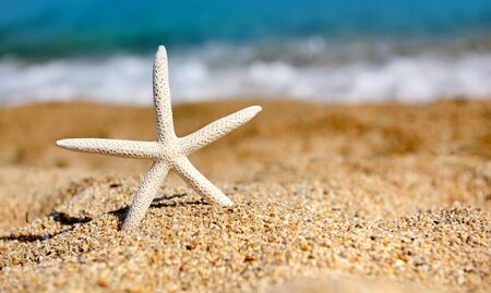 A white starfish on the beach against the background of the sea on a hot sunny day Zdjęcie Seryjne