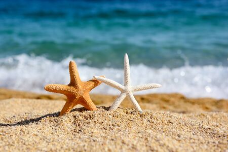 Beautiful sea stars on the beach against the background of the sea and waves on a hot sunny day