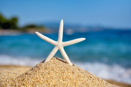 A white starfish on the beach against the background of the sea and the blue sky on a hot sunny day Zdjęcie Seryjne