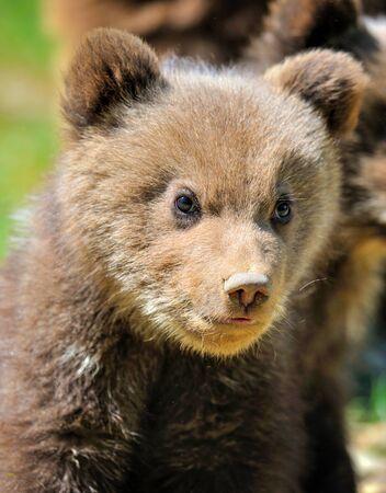 Portrait of small teddy bear in natural habitat