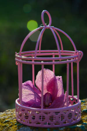 pink wilted orchid flower in pink bird cage on blurred natural background with sun glare Stock fotó