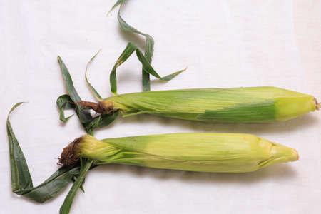 corncob: corn, maize, corncob, food