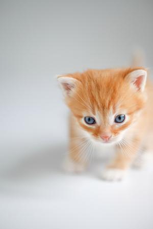 Cute red kitten on light background Stock Photo