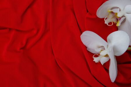 white orchids on red background Stock Photo
