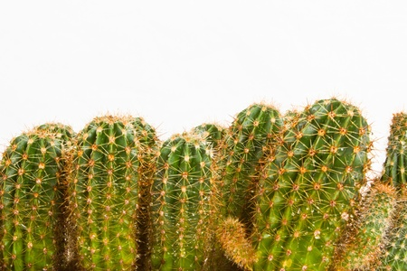 cactus species: Farm producing a wealth of  cactus species  Stock Photo