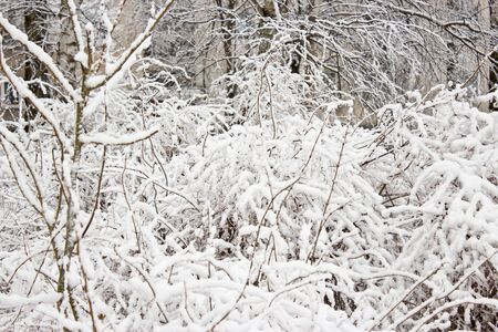 Snow covered trees, winter time  photo