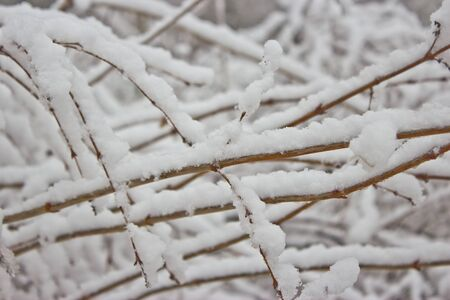Snow covered trees, winter time, close up photo