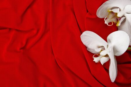 white orchids on red background photo