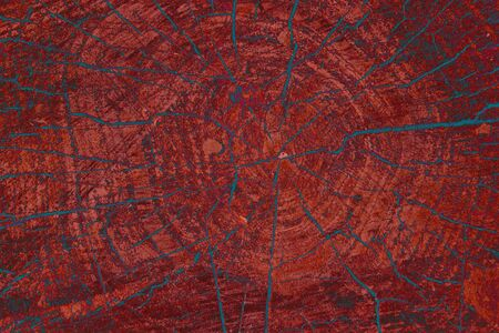 Texture of tree stump, background texture, close up   photo