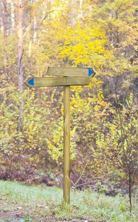 empty wooden sign in the forest photo