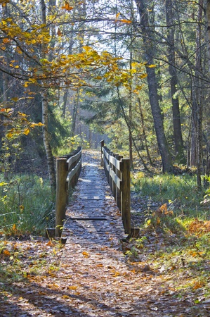 old wooden bridge in the forest Stock Photo