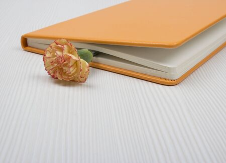 orange carnation in the book  on the table photo