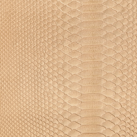 Snake skin background   photo