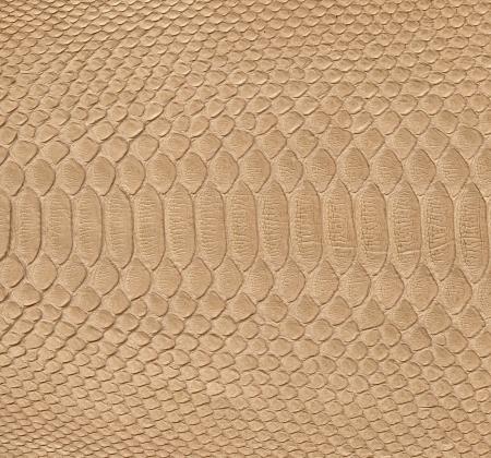 Snake skin background   photo