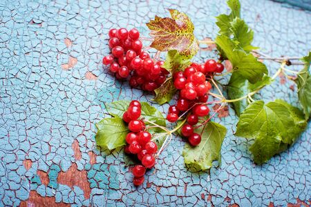 red viburnum on an old wooden background. Autumn background