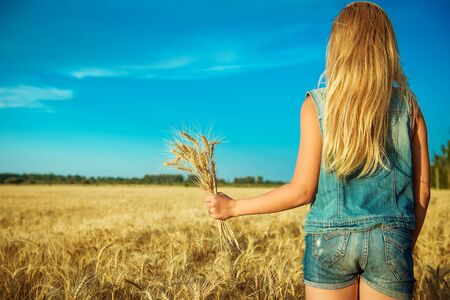 ears of wheat in women's hands on the background of field Standard-Bild