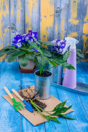 houseplants, transplanting flowers in pot, garden accessories Reklamní fotografie