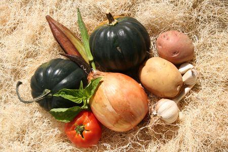autumn harvest: autumn harvest