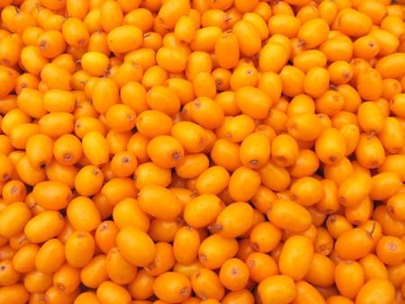 buckthorn: lot of bright berries of sea buckthorn