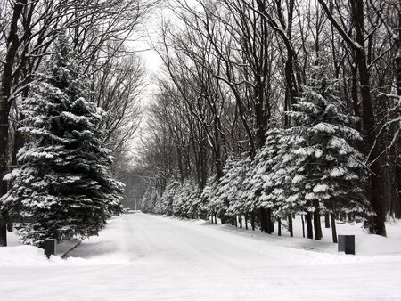 alley of the park, winter landscape photo