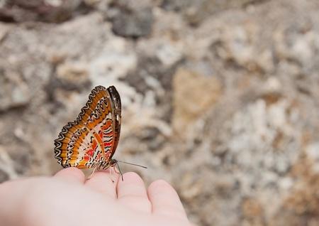 Beautiful big orange butterfly on womans hand photo