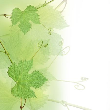 bordure vigne: Les raisins verts laisse frontali�res isol�es sur un fond blanc Banque d'images
