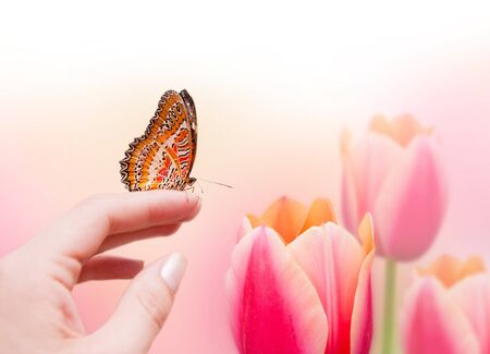 Butterfly on female hand and beautiful pink tulips