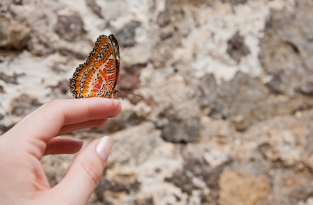 woman's hand: Beautiful big orange butterfly on womans hand