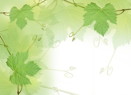 Green grape leaves border isolated on white