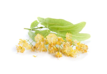 linden tea: linden flowers isolated on a white background
