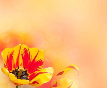 Beautiful tulip border over blurred background photo