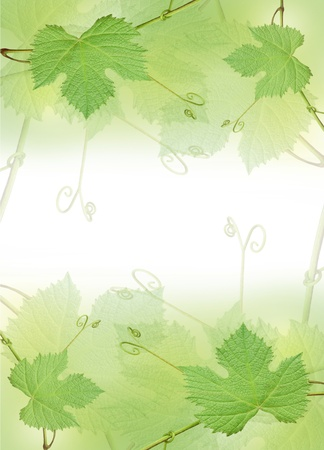 The green grape leaf border on a white background photo