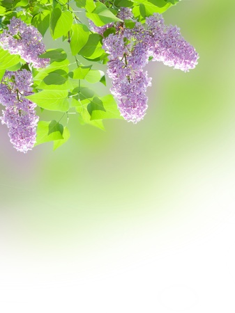 Beautiful lilac border on blurred background photo