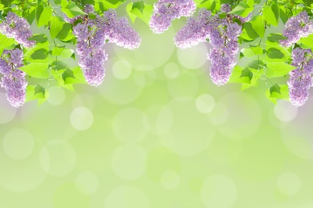 flowers bokeh: lilac background   Stock Photo