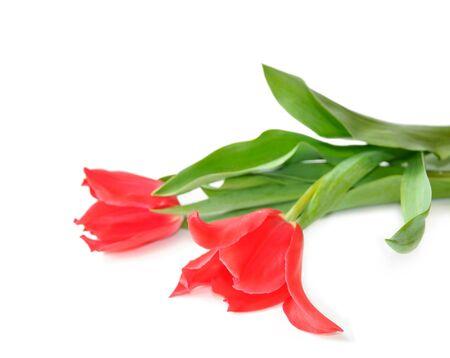 Beautiful pink tulips isolated on white background Stock Photo - 10406184